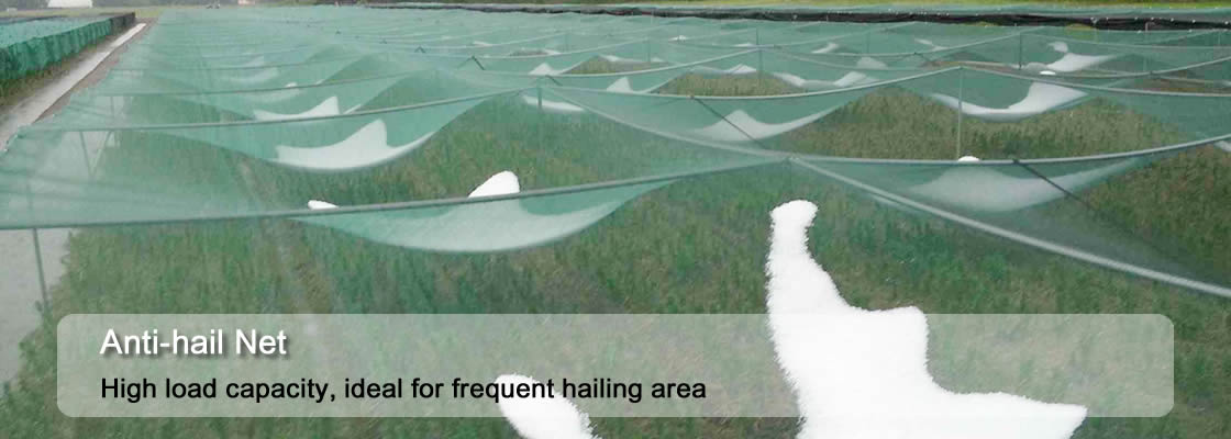 Anti-hail net prevents hail from damaging the crops after hailing