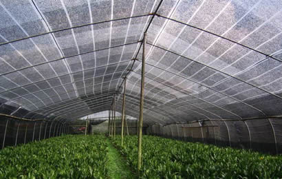 A greenhouse installed black agriculture shade net for vegetables