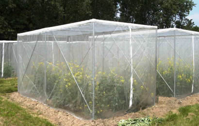 White anti-insect net used for protecting flowers