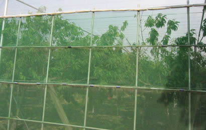 White anti-insect net used for protecting fruits