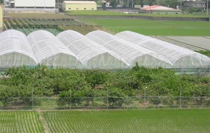 5 green houses installed white anti-insect net used for protecting crops